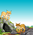 Two tigers living in the cave vector image vector image