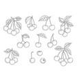 cherry set hand drawn natural healthy fruits vector image