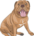 Dogue de Bordeaux a vector image vector image