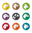 group dog in circle vector image vector image