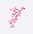 japanese sakura or cherry blossom branch with vector image vector image