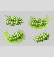 realistic grapes bunches and splashes set isolated vector image vector image