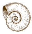 engraving of spirall shell vector image vector image