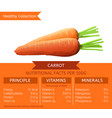 healthy collection carrot vector image vector image
