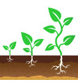 the stage of growth of a sprouts vector image vector image