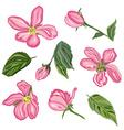hand drawn cherry blossom flowers set vector image