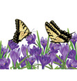 purple crocus flowers vector image vector image