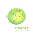 fresh cabbage isolated on white background vector image vector image