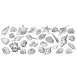 hand drawing seashells set long vector image