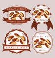 the theme brazil nut vector image vector image