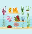 seaweed underwater wildlife marine botanical vector image vector image