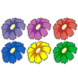 Six colourful flowers vector image vector image