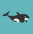whale killer in water flat orca swimming vector image vector image