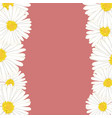white aster daisy flower border vector image vector image