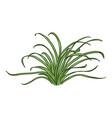 cartoon wild growth green grass vector image vector image