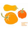 Squash Pumpkin vector image vector image