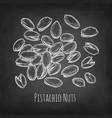 chalk sketch of pistachio nuts vector image
