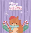 cute bear with hat candy canes leaves merry vector image vector image