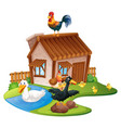 ducks and chickens on the farm vector image vector image