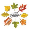 hello autumn pattern vector image vector image