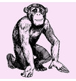 monkey or chimpanzee vector image