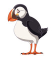 cartoon smiling puffin vector image