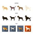 collie labrador boxer poodle dog breeds set vector image vector image