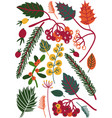 colorful leaves and berries autumn floral vector image vector image