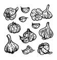 garlic spicy seasoning for menu food vector image