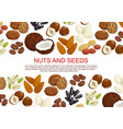 nuts and fruit seeds sweets poster vector image vector image