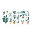 set different tropical house plant ficus vector image