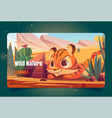 wild nature banner with tiger sneaks in desert vector image vector image