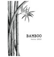 bamboo background hand drawing engraving style vector image vector image