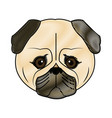 cute face dog pug pet aminal image vector image