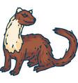 standing weasel or marten vector image