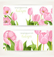 two horizontal banners with pink flowers tulips vector image vector image