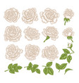white roses hand drawn flowers and vector image
