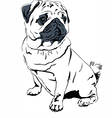 Sweet dog pug breed hand drawing vector image vector image