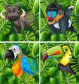 Wild animals in the safari vector image