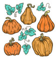 big pumpkins vector image