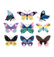 color drawing butterfly set vector image vector image