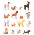 dog breeds retro cartoon icons collection vector image