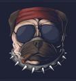 pug dog head smoke vector image vector image