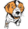 puppy design vector image vector image