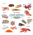sketch colorful marine creatures collection vector image vector image