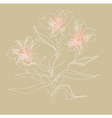 alstrameriya vector image vector image