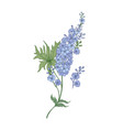 delphinium or larkspur purple blooming flowers vector image vector image