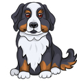 dog breed bernese vector image vector image