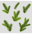 firtree isolated isolated transparent background vector image vector image