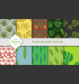 hand drawing set of tropical backgrounds palm vector image